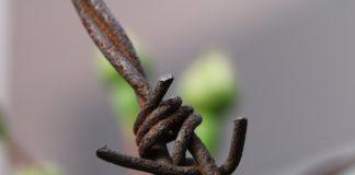 drut kolczasty
