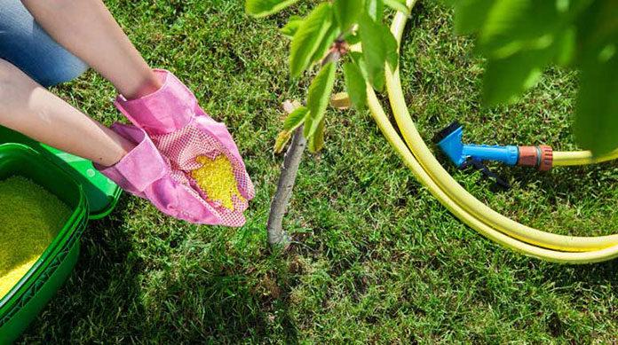 Jaki wybrać nawóz do roślin w naszym ogrodzie?